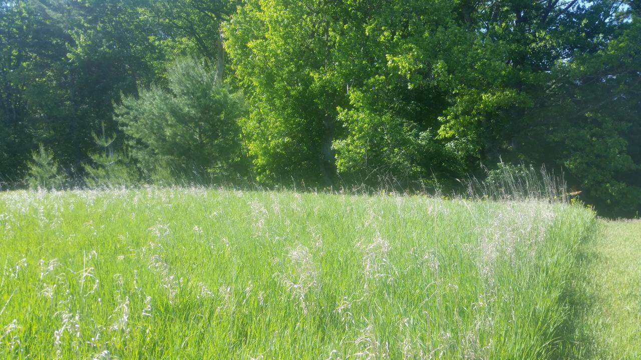 View Vacant Land For Sale at Lt 24 Noquebay RD, Crivitz, WI