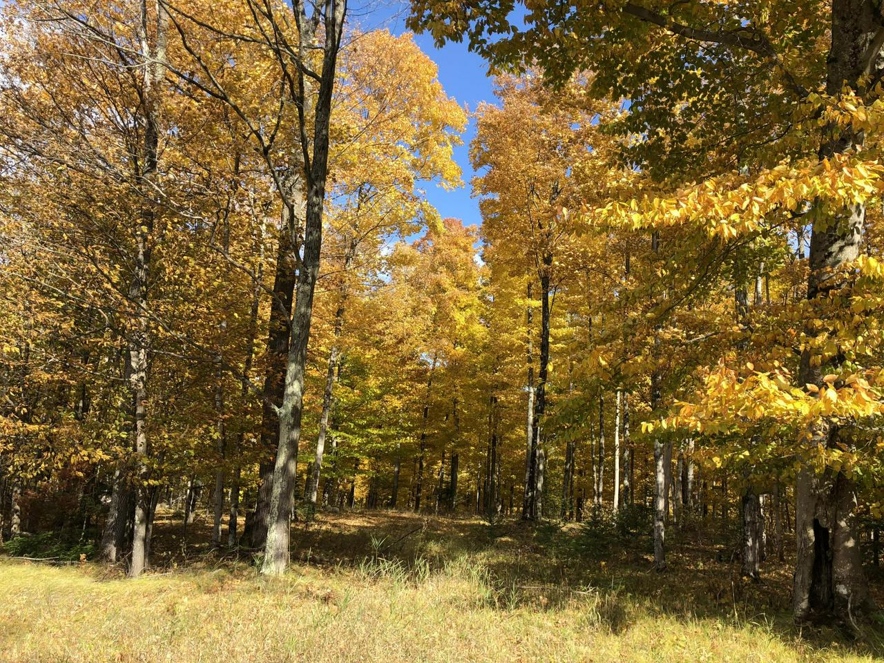 View Vacant Land For Sale at Lt0 Co Rd 366, CEDARVILLE, MI