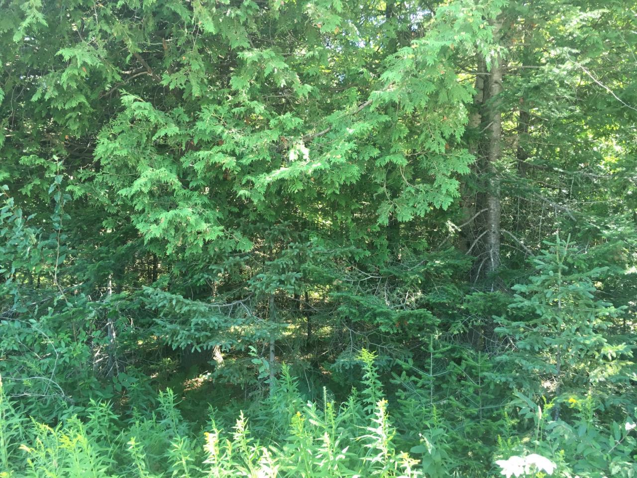 View Vacant Land For Sale at W8902 G-12, LAKE, MI