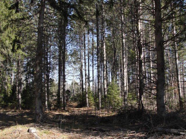 View Vacant Land For Sale at 13 Acres Walton Rd, Dunbar, WI