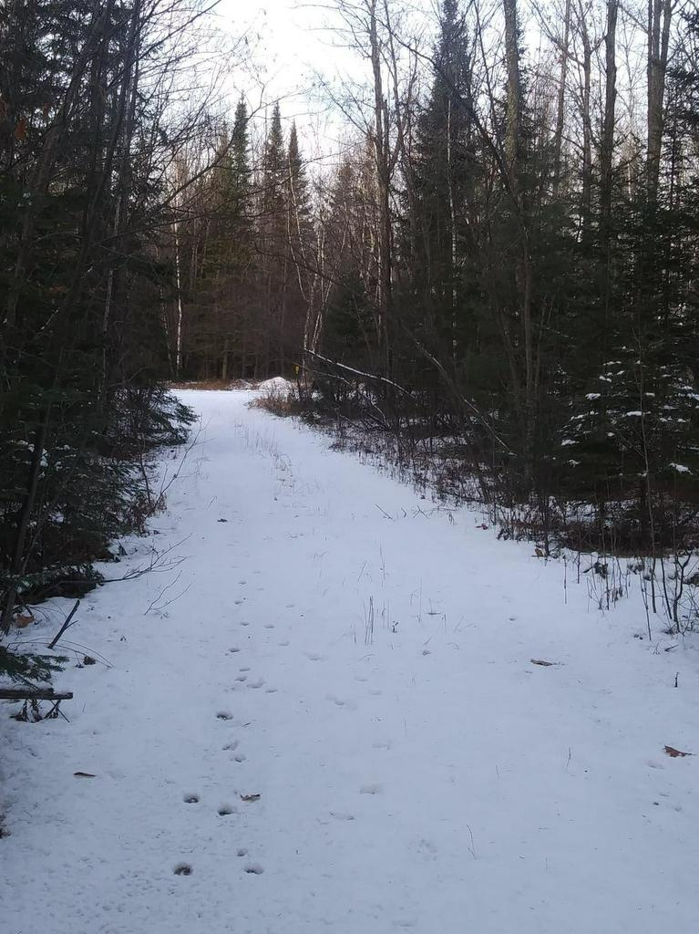View Vacant Land For Sale at 39 Acres Pioneer Rd, Crivitz, WI