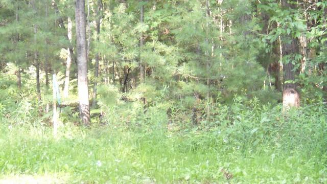 View Vacant Land For Sale at Lt 0 Pines Ln, Wausaukee, WI