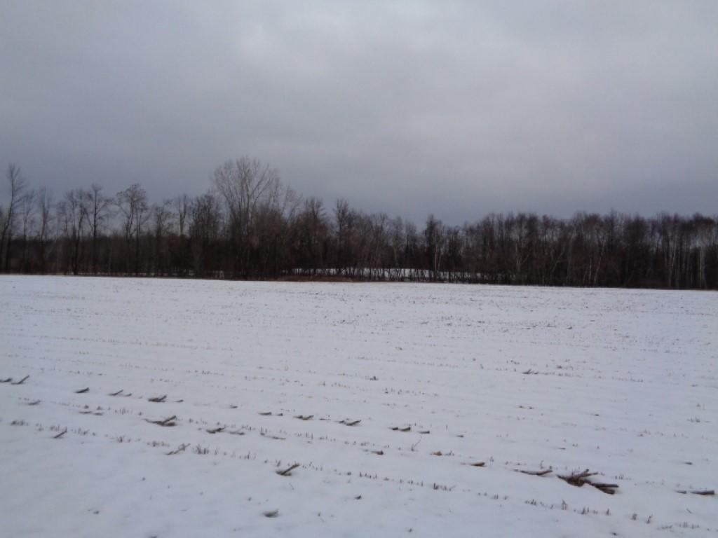 View Vacant Land For Sale at 0 40 acres, Sobieski, WI