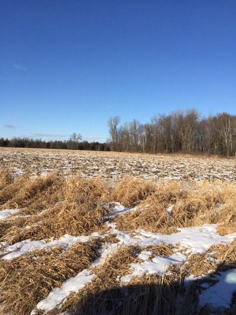 View Vacant Land For Sale at CEDAR ROAD, Fremont, WI