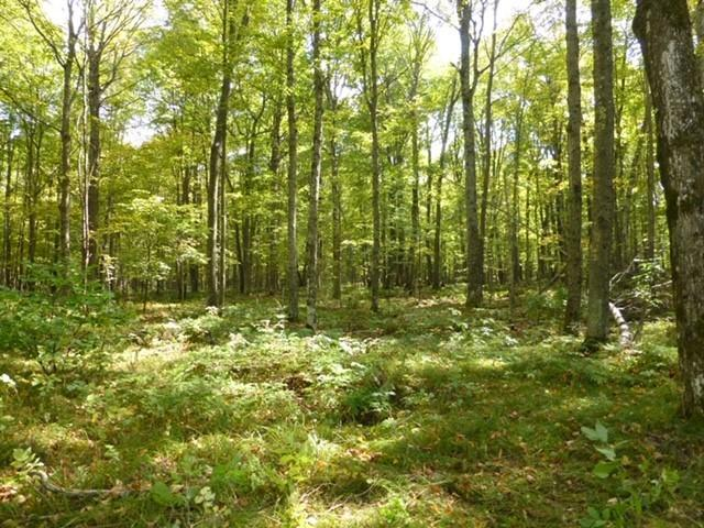 View Vacant Land For Sale at Lt0 E Halsey Lake Rd, Long Lake, WI