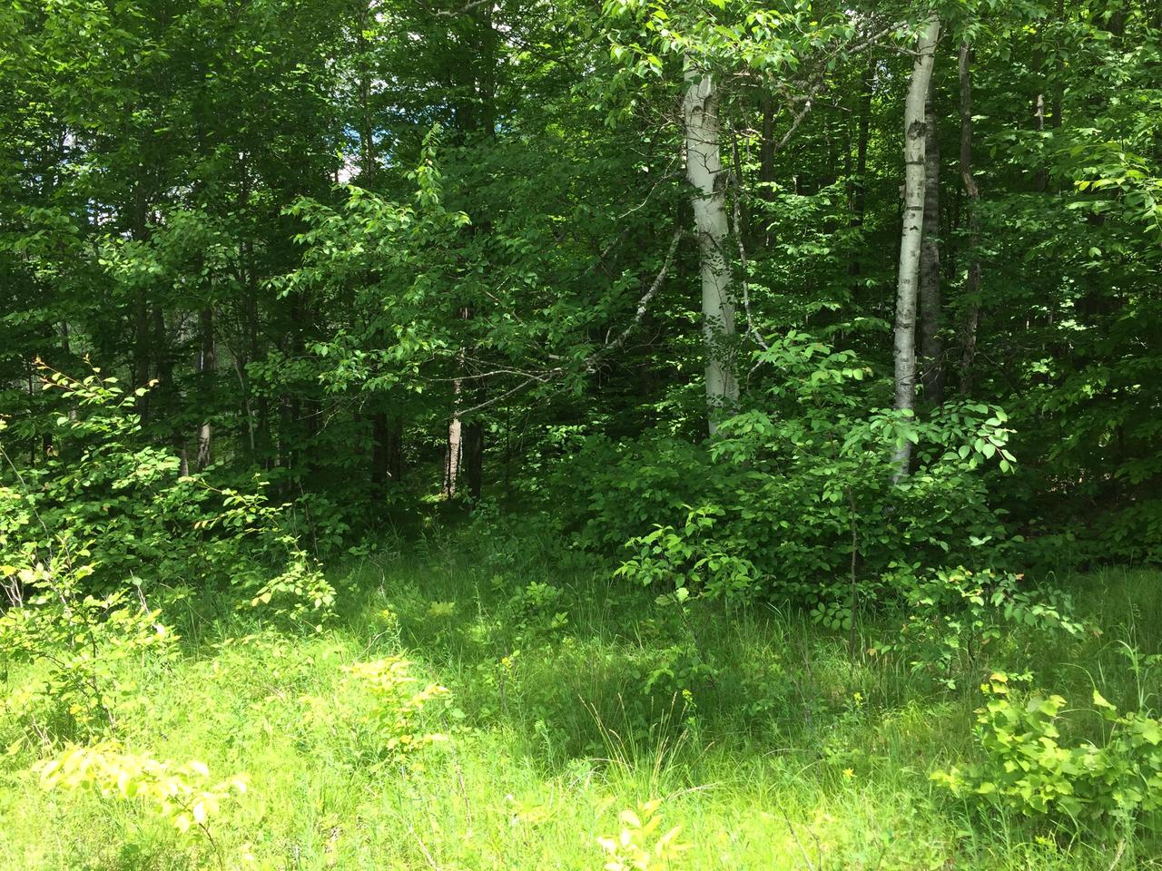 View Vacant Land For Sale at W16200 Klug Ln, Athelstane, WI