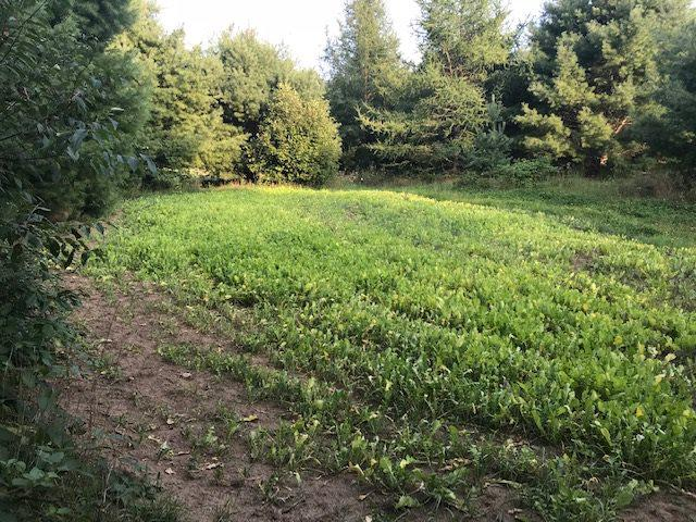 View Vacant Land For Sale at W2617 HWY 180, Wausaukee, WI