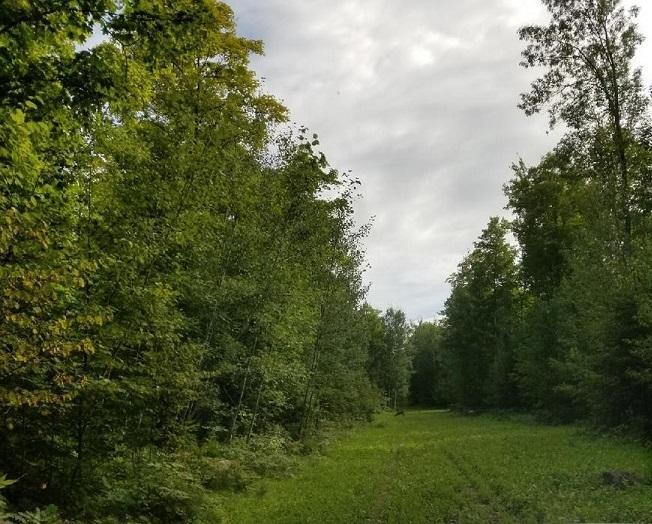 View Vacant Land For Sale at LT Procupine LK Rd, Goodman, WI