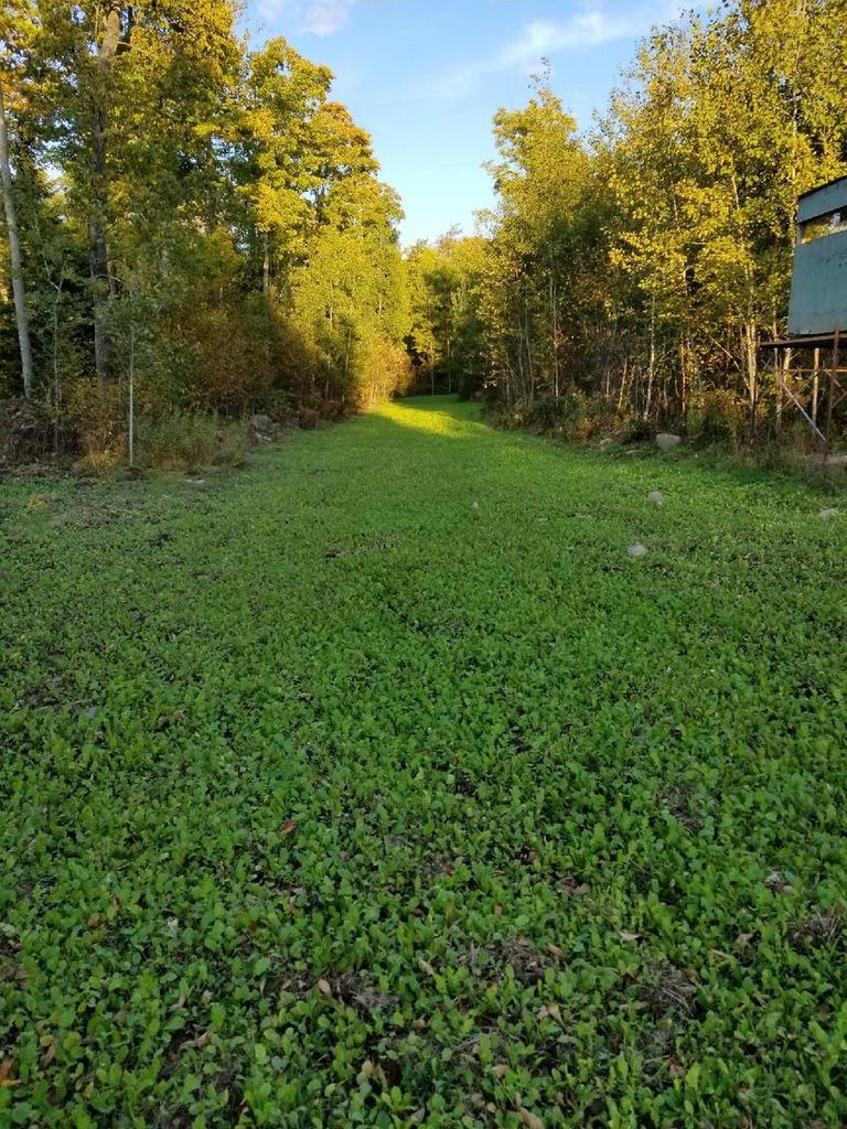 View Vacant Land For Sale at LT Porcupine LK Rd, Goodman, WI