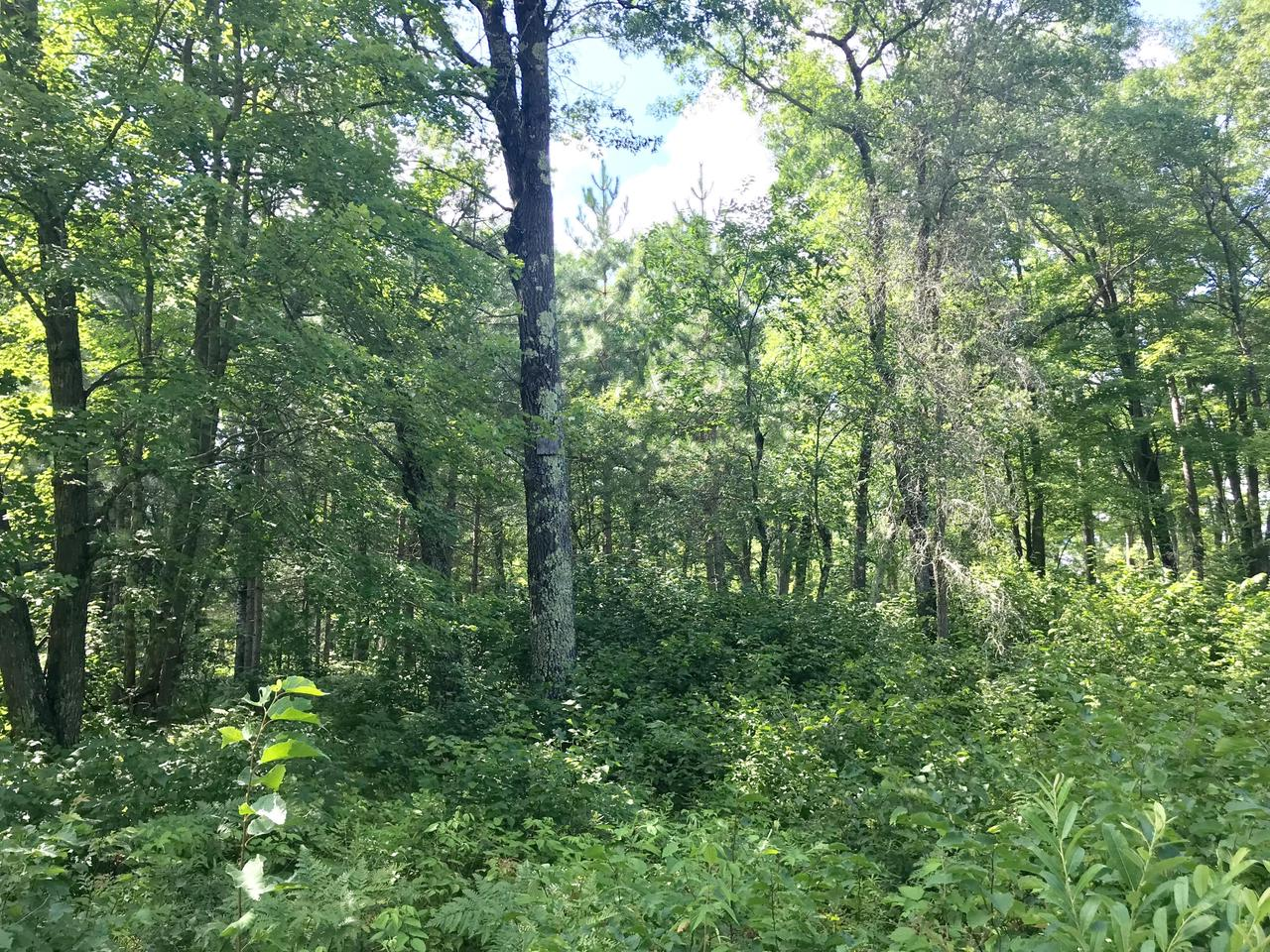 Wooded lot in the heart of the High Falls area. ATV trail access and close to public lands and numerous boat landings!**Also available with lot 3 for a total of 1.75 Acres for $30,000