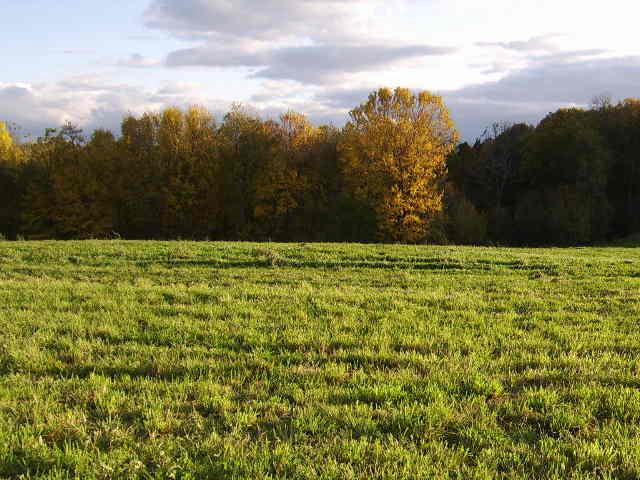 Build your dream home with exceptional views.  Great location for horses!  Cropland can be rented for income.  Choice of 2 lots.  Only minutes from the Village of Black Earth, and 20 minutes to Middleton/Madison.